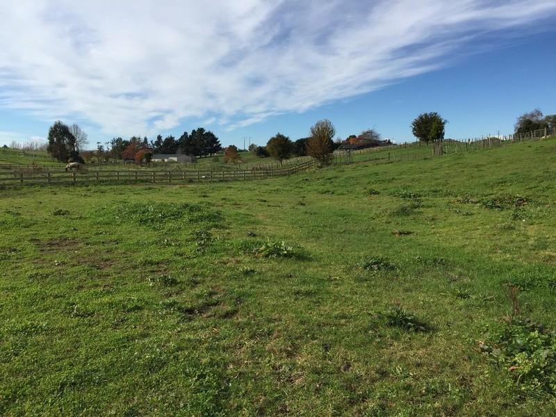 92 Preston Road, Te Awamutu - Property for Sale in Te Awamutu